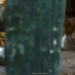 Cats in abandoned house in Buffer zone