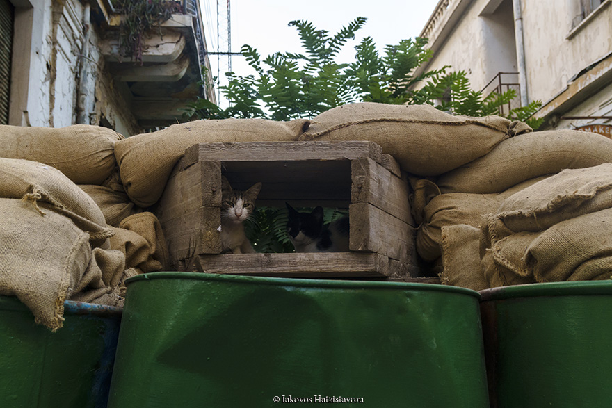 Cats in Buffer zone